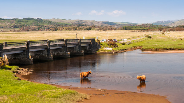 Coos in Crinan river