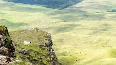 Sheep on mountain ledge in Scotland
