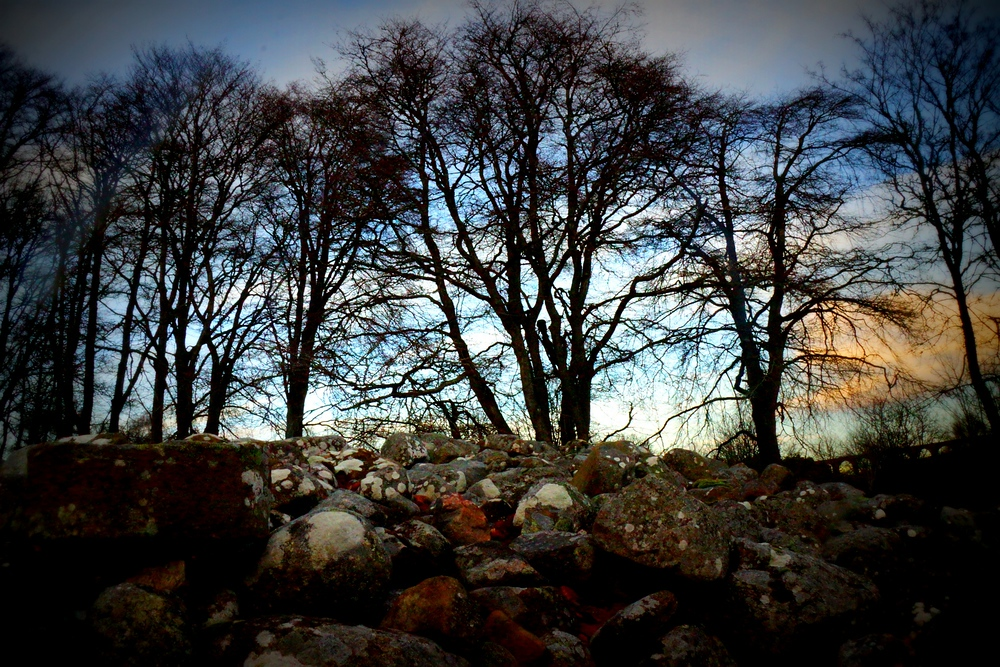 Silhouette trees nearby Clava Cairns