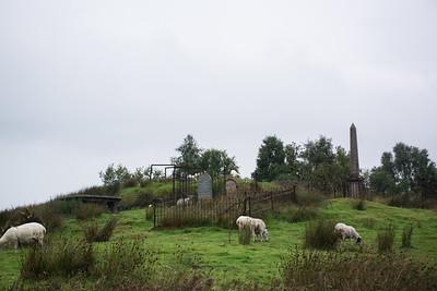 Sheep near Ben Nevis, Scotland