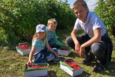 raspberries, strawberries & blackcurrants