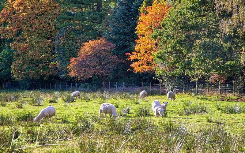 Scottish Countryside near Gargunnock, Stirling.