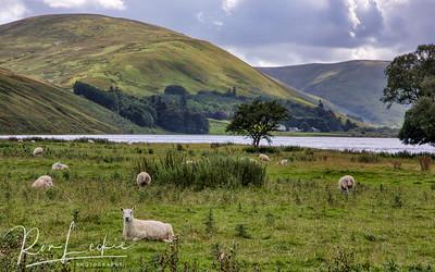 Scottish Borders - St Mary's Loch
