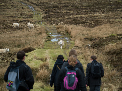 Sheep vs Becca