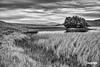 LochAwe_MG_5301