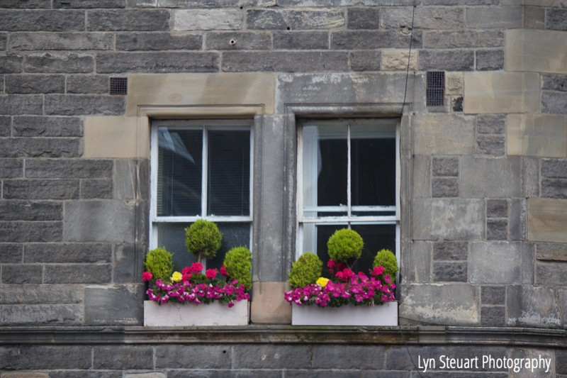 one of the many windows decorated with floral window boxes!