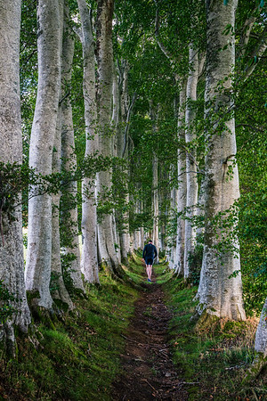 Beech trees walking trail in the heart of Royal Deeside and Aberdeenshire.