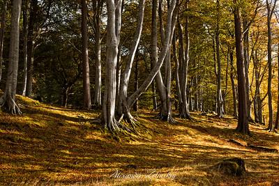 Strathbeag Forest