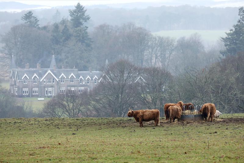 Scottish Highland Cow, Cairngorms National Park, Scotland, United Kingdom