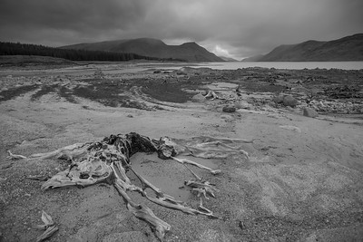 Petrified roots at Loch Ericht