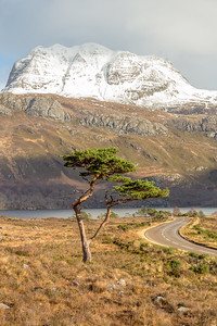 Lone tree Loch maree