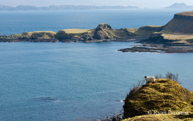 Photo:  A sheep perched high above the ocean.  Honestly you can point a camera in any direction on this island and come up with a great photo.