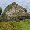 Puffin colony west Caithness, Scotland