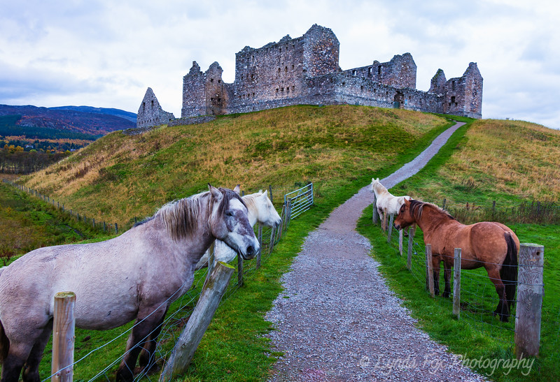 Castle with Horses