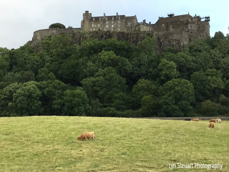 Pasture below Stirling Castle