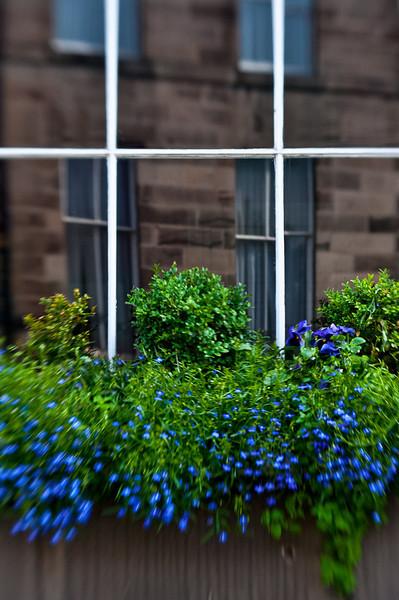 Lush greenery adorned window sills everywhere.