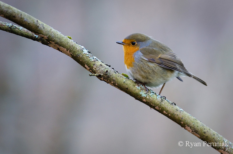 Photo:  One of the many birds in the Scottish forests.