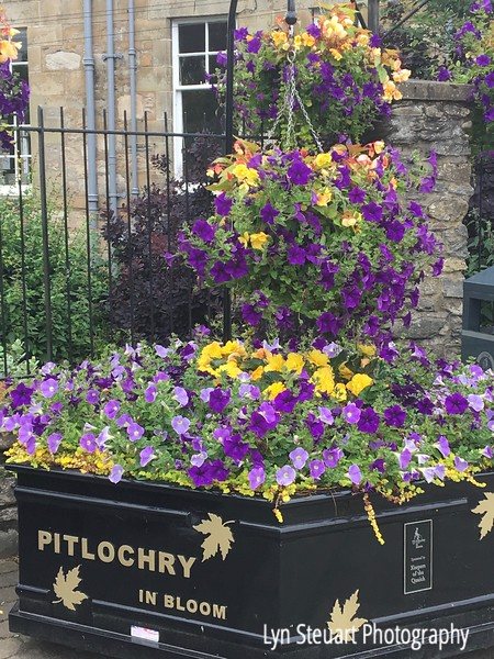 A few of the flowers in Pitlochry's town center.