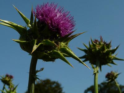 Scotland: Flora and Fauna