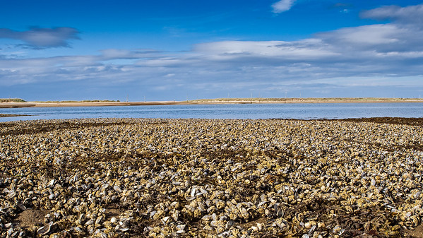 Second World War Anti-Glider Poles and Mussel beds, Culbin