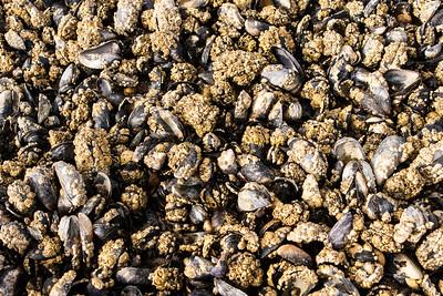 Mussel Beds, Culbin