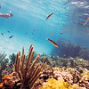 DSC03962 David Scarola Photography, Bahamas Snorkeling, option
