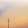 DSC09482 David Scarola Photography, Bird at Sunset, option