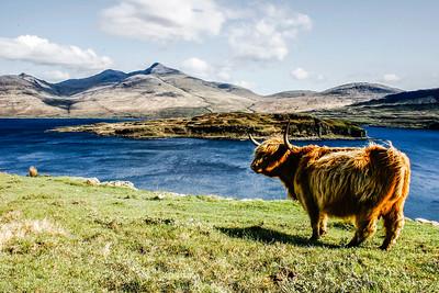 Celeimages Scottish Wildlife_-12.jpg