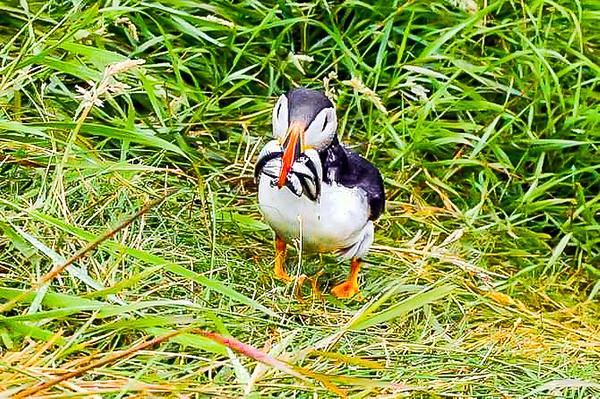 Celeimages Scottish Wildlife_-19
