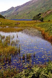 Water-lilies in Lochan an Obain Bhic, South Morar.  06/08/95