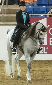 Scottsdale Arabian Horse ShowFebruary 13 2016 015