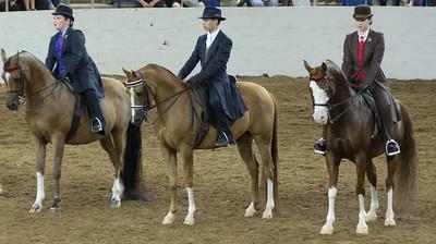 Scottsdale Arabian Horse ShowFebruary 13 2016 016
