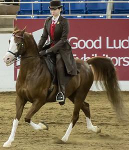 Scottsdale Arabian Horse ShowFebruary 13 2016 012