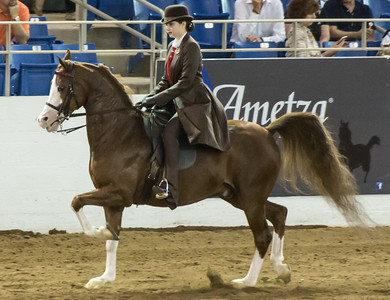 Scottsdale Arabian Horse Show Feb 2016