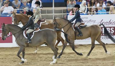 Scottsdale Arabian Horse ShowFebruary 13 2016 018