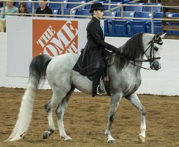 Scottsdale Arabian Horse ShowFebruary 13 2016 013