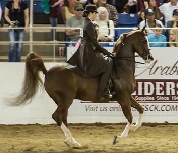 Scottsdale Arabian Horse ShowFebruary 13 2016 014