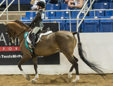 Scottsdale Arabian Horse ShowFebruary 13 2016 023
