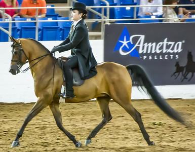 Scottsdale Arabian Horse ShowFebruary 13 2016 010