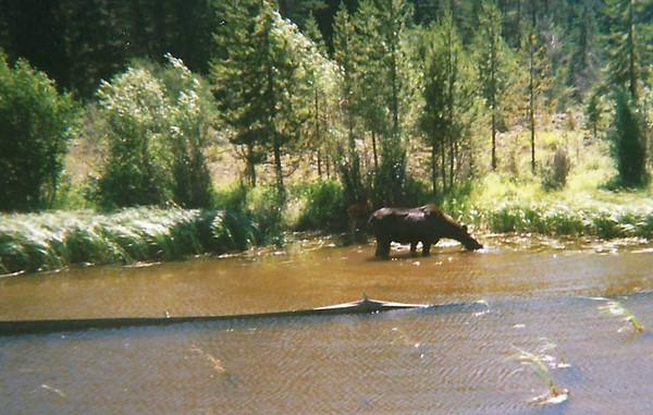 Camp Buffalo Bill