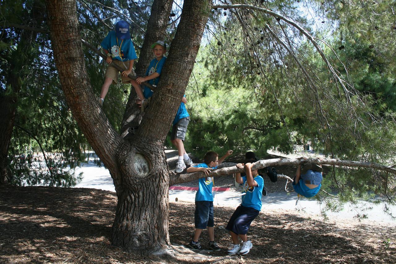 Scout Camp 2010 013