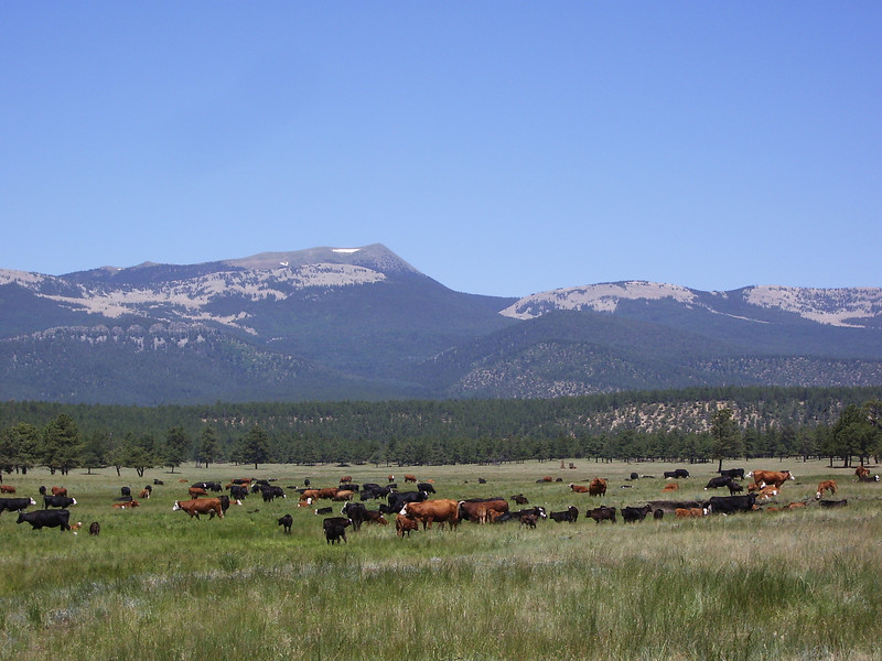 Pasture at Whiteman Vega