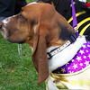 March-29-Bassets1 012 - Drool.jpg