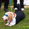 March-29-Bassets2 036