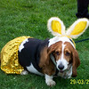 March-29-Bassets2 015