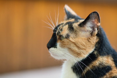 Cat - Tests