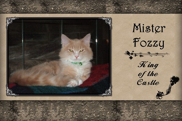 Life and Times of Fozzy