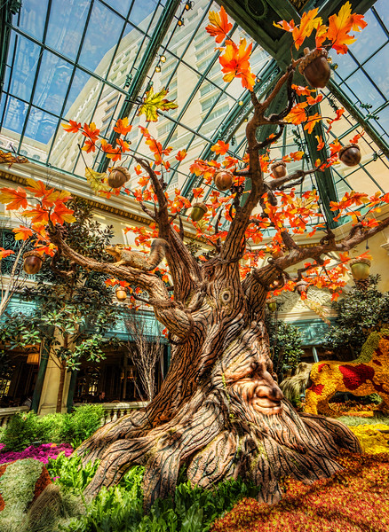A tree in the garden of Bellagio