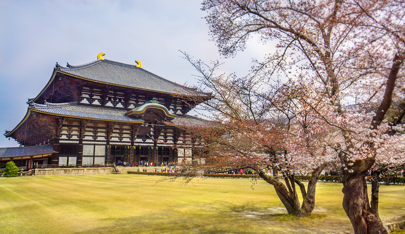 Nara, Todai-ji Temple & Cherry Blossom