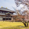 Nara, Todai-ji Temple & Cherry Blossom